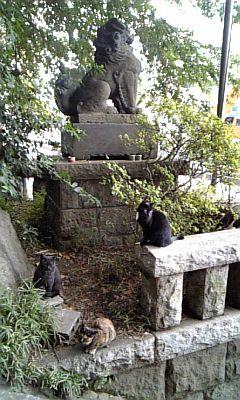 猫八幡宮?