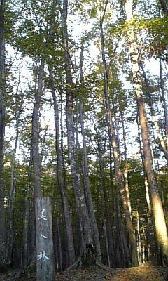松之山、美人林